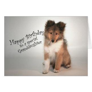 Sheltie Birthday Card for Granddaughter
