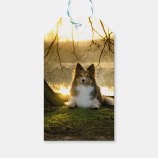 sheltie gift tags