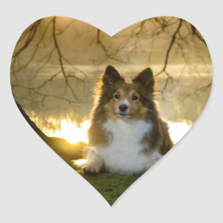 sheltie heart sticker