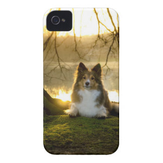 sheltie iPhone 4 cover