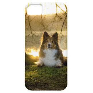 sheltie iPhone 5 case