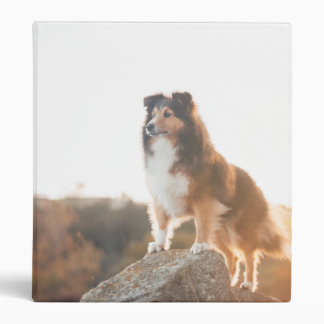 Sheltie on Cliff protecting heard during sunset 3 Ring Binder