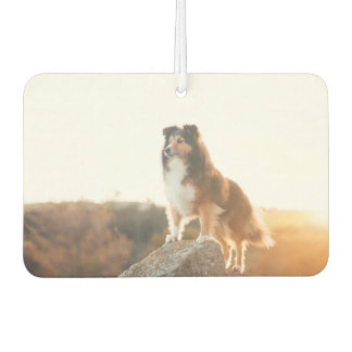 Sheltie on Cliff protecting heard during sunset Air Freshener
