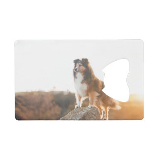 Sheltie on Cliff protecting heard during sunset Credit Card Bottle Opener