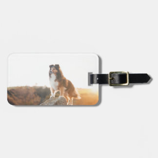 Sheltie on Cliff protecting heard during sunset Luggage Tag