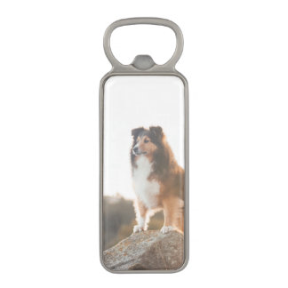 Sheltie on Cliff protecting heard during sunset Magnetic Bottle Opener