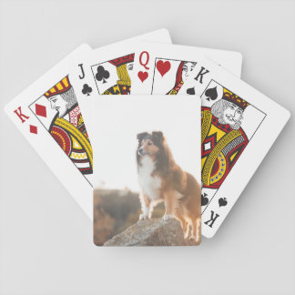 Sheltie on Cliff protecting heard during sunset Playing Cards