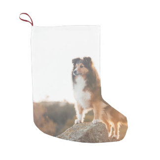 Sheltie on Cliff protecting heard during sunset Small Christmas Stocking