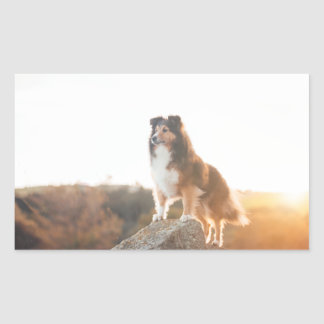 Sheltie on Cliff protecting heard during sunset Sticker