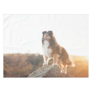 Sheltie on Cliff protecting heard during sunset Tablecloth