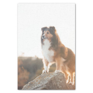 Sheltie on Cliff protecting heard during sunset Tissue Paper