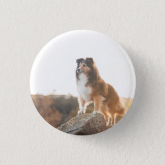 Sheltie on Cliff protectng heard during sunset 1 Inch Round Button
