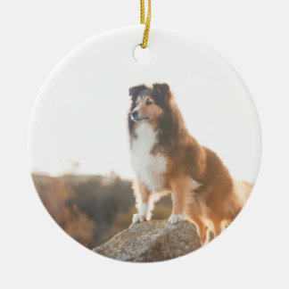 Sheltie on Cliff protectng heard during sunset Ceramic Ornament