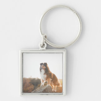 Sheltie on Cliff protectng heard during sunset Keychain