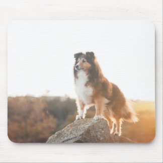 Sheltie on Cliff protectng heard during sunset Mouse Pad