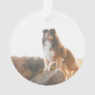 Sheltie on Cliff protectng heard during sunset Ornament