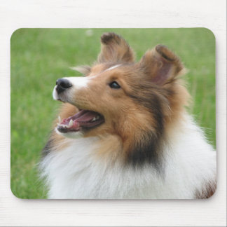 Sheltie on mousepad