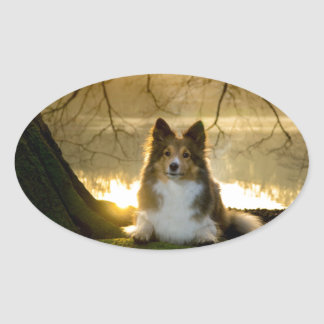 sheltie oval sticker