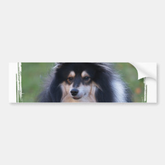 Sheltie Photo Bumper Sticker