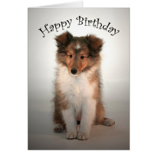 Sheltie Puppy Birthday Card
