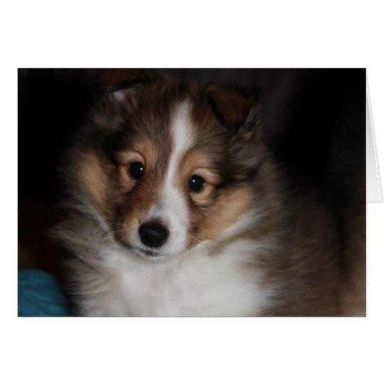 Sheltie Puppy Card