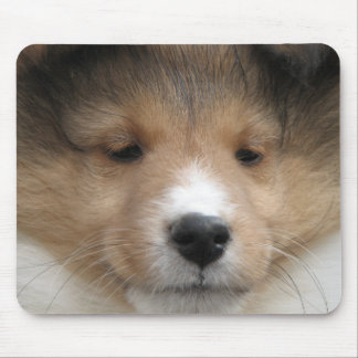 Sheltie puppy face mouse pad