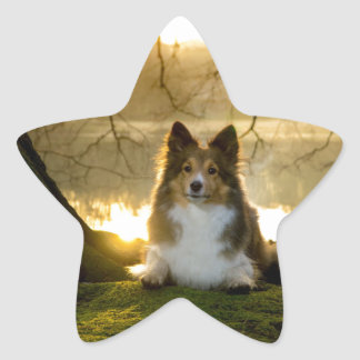 sheltie star sticker
