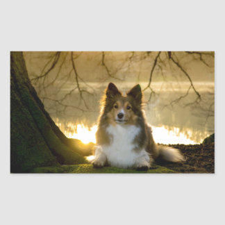 sheltie sticker