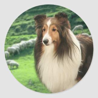 Shelties Lead Sticker