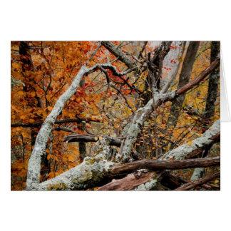 Shenandoah Autumn Fallen Tree Card