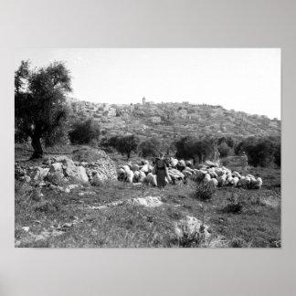 Shepherd and sheep outside of Bethlehem Poster