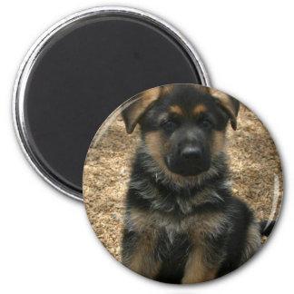 Shepherd Puppy  Magnet