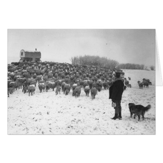 Shepherd with Flock Card