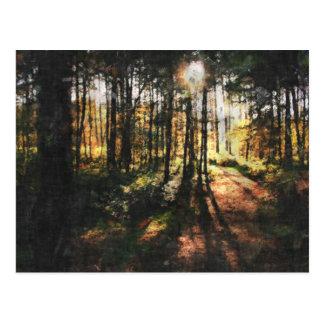Sherwood Forest Sunset Postcard