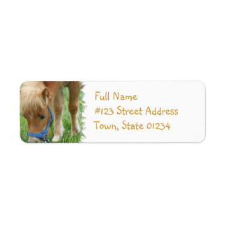 Shetland Pony Mailing Label Return Address Label