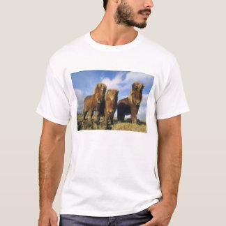 Shetland Pony, mainland Shetland Islands, T-Shirt