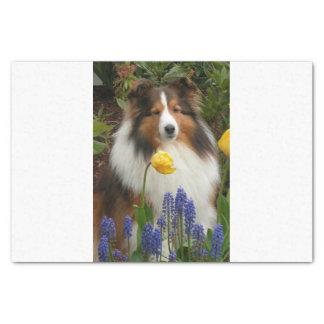 shetland sheepdog in flowers tissue paper