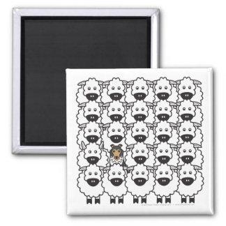 Shetland Sheepdog in the Sheep Square Magnet