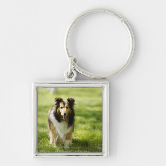 Shetland Sheepdog running on the grass Keychain
