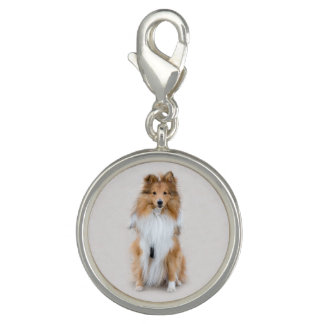 Shetland Sheepdog, sheltie cute dog photo portrait Charms