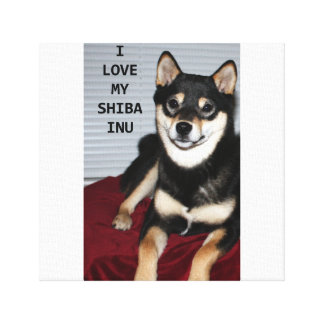 shiba full black and tan love w pic canvas print