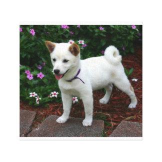 shiba-inu-cream pup canvas print