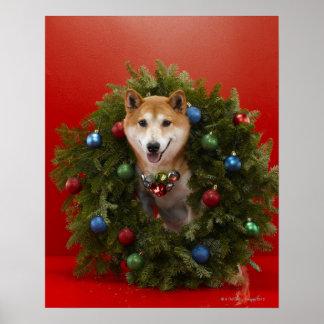 Shiba Inu dog sitting in Christmas wreath Poster