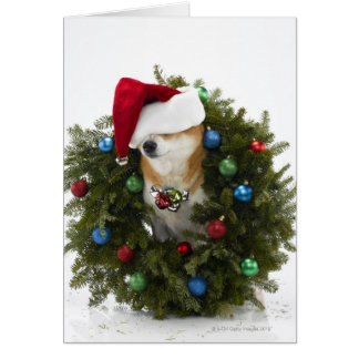 Shiba Inu dog wearing Santa hat sitting in Card