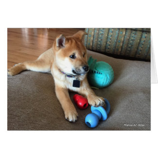 Shiba Inu Puppy With Colorful Toys Photograph Card