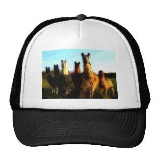 Shifty llamas trucker hat