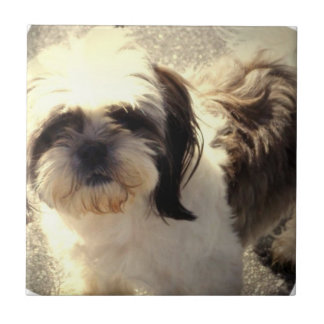 Shih-Tsu Dog Tile