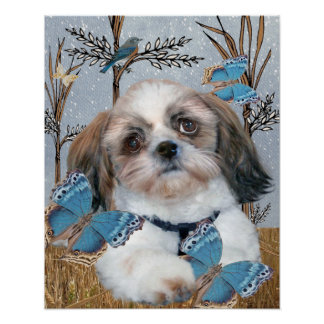 Shih Tzu and Butterflies Print