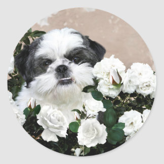 Shih Tzu and roses Round Sticker