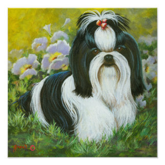 Shih Tzu Art Print on Canvas